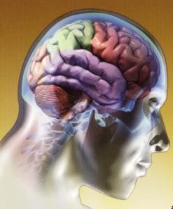 Existe, pelo menos, cinco alimentos que aumentam a atividade cerebral sem químicos, são eles: espinafres, grãos de café, lentilhas , nozes e as sardinhas.